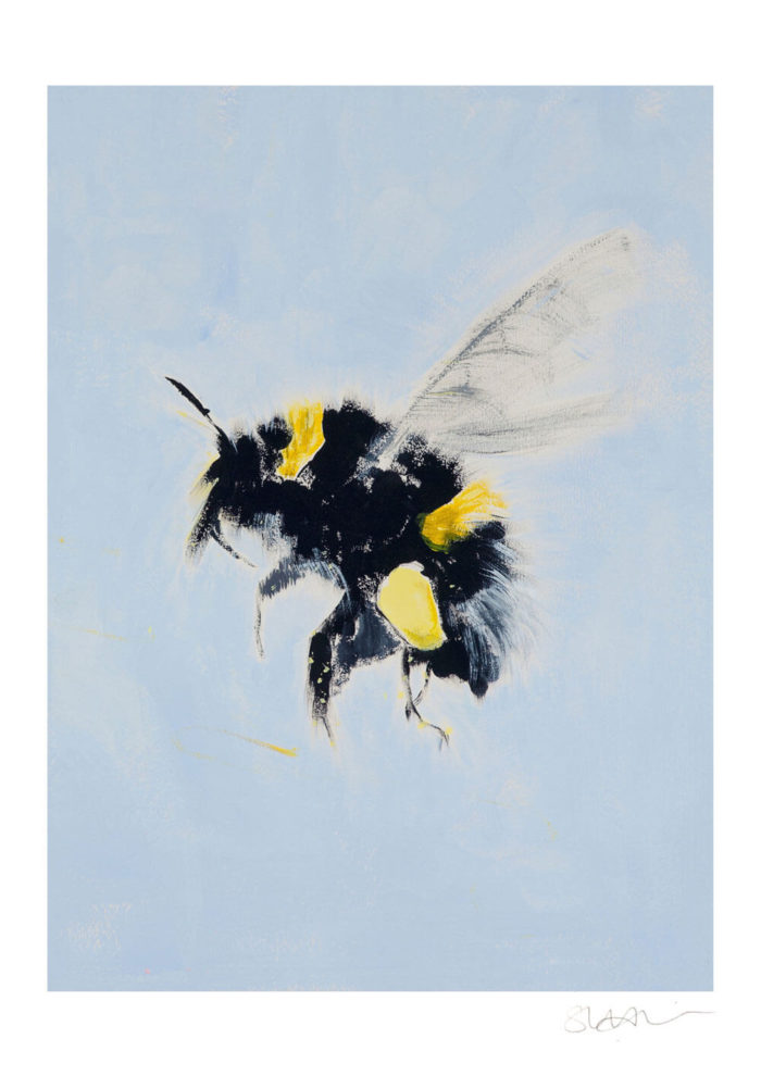 Bumblebee print by Isle of Wight artist Sonia McMullen. Bring the outside in with the cool hues of the buff tailed bumblebee. A fresh palette, white edge and minimal brush strokes bring a contemporary feel to the image of this little European native. The clear blue background of this Bumblebee print will set a calming, soothing vibe to your space. This wildlife wall art print is available in 5 sizes, A4-A0. Paper: Acid-free, museum quality fine art paper with a soft textured finish. Weight: 315gsm, Frame not included