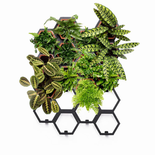 A large living wall planter kit that fits that will give your space botanical comfort. The design makes it easy to care for and fit into your interior style. A large, but not overly imposing indoor plant wall kit consisting of 12 terracotta planters and 6 frames. With this large living wall planter, you can have a different natural home effect for different rooms. For instance, a vertical food garden, an impressive living room statement piece to soothe body and mind, an inviting green wall hallway, or a fully immersive living green bathroom. The plants can easily be lifted out for re-potting. Watering the plant's roots is easy through the holes in the planter's top side, which features a sloping edge to avoid spills. The terracotta planters are beautiful in themselves, so leave some of them unplanted while you decide the direction you want your vertical wall planter to take. The frames are made of powder coated steel. The vertical garden planters are available to order in 4 sizes (small to extra large). You can buy spare planters and frames as your urban jungle expands and you want to grow your vertical wall planter. Product dimensions: (w)920mm x (h)1150mm x (d)180mm Plants not included, but we have some great tips for living wall plants on the website. The terracotta planters and frames, by Horticus, are made in the UK by craftsmen with expertise and precision. Note, some natural variation in tone occurs in terracotta. Please contact us for a shipping quote.