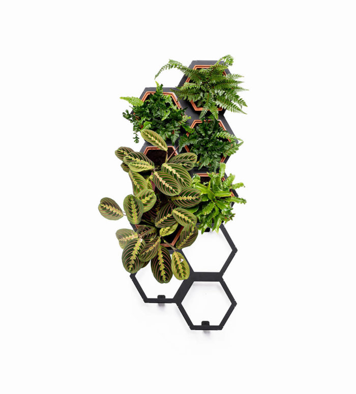 A vertical planter that makes a statement in a natural interior. Botanical style that's easy to care for. An ideal interior living wall kit consisting of 6 terracotta planters and 3 frames. This modular living wall system lets you customise the look, with a choice of kits to suit the space and style of your room (S-XL). There's so much potential to design your perfect layout! Water your vertical horticulture garden from the top of each terracotta planter, through the specially designed holes. The slope to prevents overflowing. The natural terracotta planters and frames are made to be visible. The frames are stylishly made from powder coated steel. Reconnect your home interior with nature with a vertical living wall; your mind and body will thank you for it. Bringing nature into our home for wellness called biophilic interiors. Create a vertical living wall statement piece, an urban jungle bathroom, vertical garden kitchen or a relaxing oasis in a bedroom. Add some air purifying and calming plants in your vertical planter, like lavender and peace lilies, creating your dream nature inspired home decor. Product dimensions based on the visual shown: medium kit (w)460mm x (h)1150mm x (d)180mm The terracotta planters and frames are made in the UK by Horticus with passion, expertise and precision. Not all terracotta planters will look identical, but each will have its own unique tone.