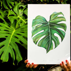 Monstera Deliciosa print from original artwork by Dublin based Dollybirds Art. The series contains several popular plants and animals.