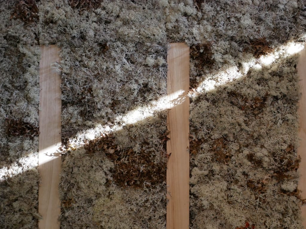 Browns and beige moss is non intrusive, but adds so much warmth. I love how it reacts to the light entering its space.
