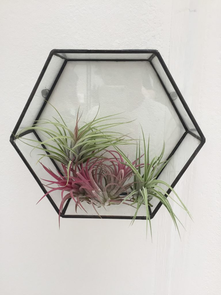 House & Garden Fair - Beautiful shades of air plant from Monti by Monti