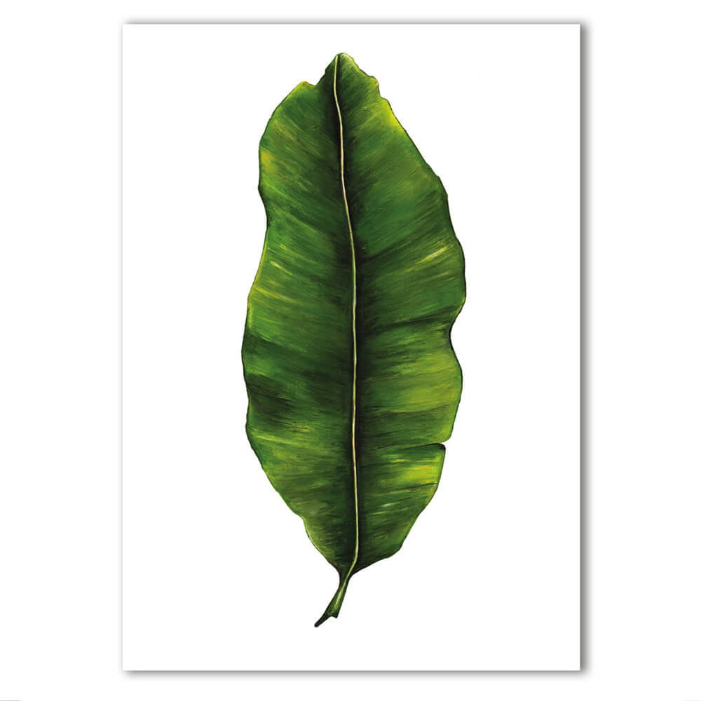 Banana Leaf print Musa Acuminata. Painted, printed and hand finished in Belfast. Part of the Dollybirds Art botanical collection.
