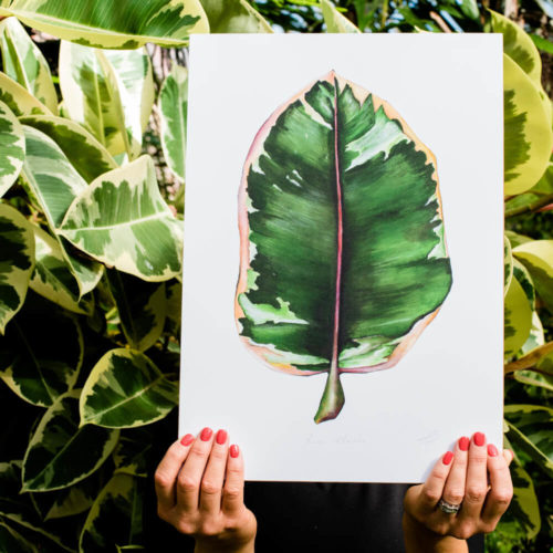 Rubber Plant print Ficus Elastica lifestyle signed A3. Painted, printed and hand finished in Belfast by Dollybirds Art. Printed onto thick 300GSM IPS uncoated art paper. Part of the inspiring Dollybirds Art botanical collection, getting you one step closer to nature.