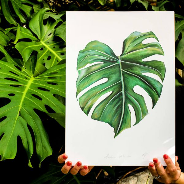 Botanical Print - Cheese Plant- Monstera Deliciosa lifestyle, signed A3. Painted, printed and hand finished in Belfast by Dollybirds Art. Printed onto thick 300GSM IPS uncoated art paper. Create powerful natural impact with all three tropical botanical prints in the Dollybirds collection!