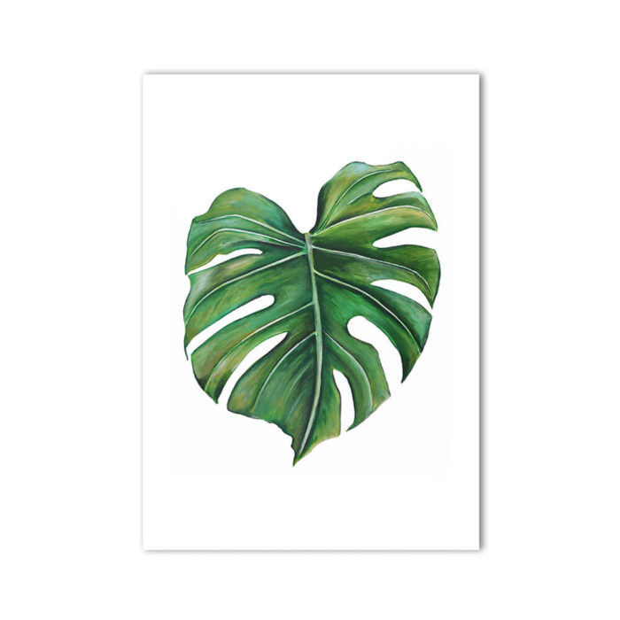Cheese Plant Print Monstera Deliciosa product, signed A3. Painted, printed and hand finished in Belfast by Dollybirds Art. Printed onto thick 300GSM IPS uncoated art paper. Create powerful natural impact with all three tropical botanical prints in the Dollybirds collection!
