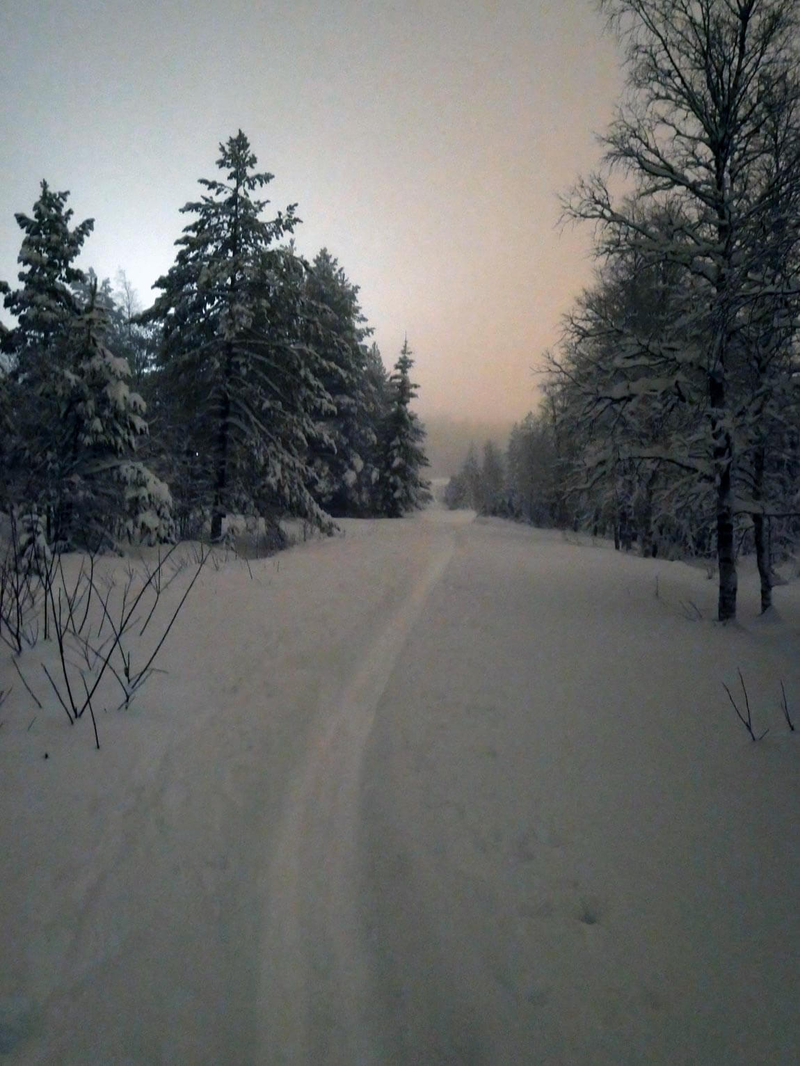 The path into the snowy woods after dark. Sälen, Dalarna county, Sweden.