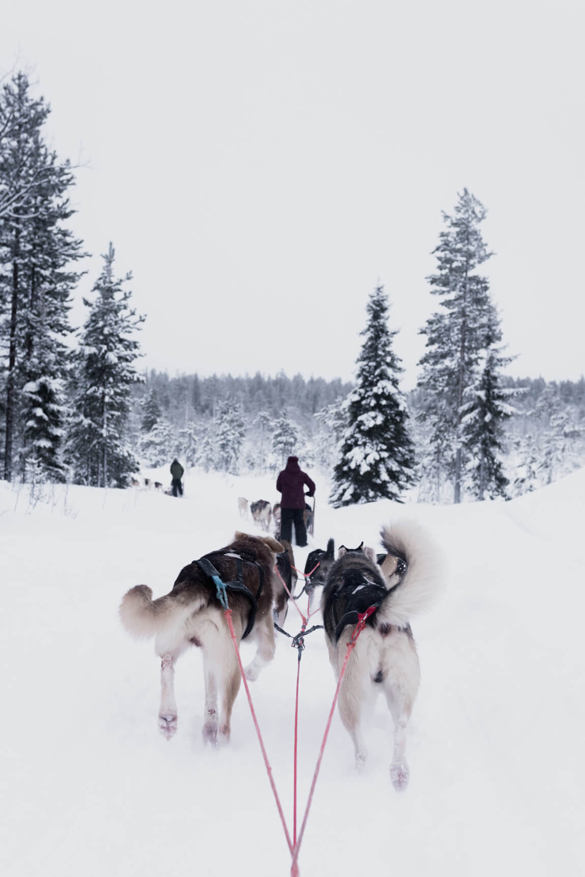 Husky rides in Finland. Pushing your body to extremes for wellbeing. Image by Darkroomsg on Unsplash.com.