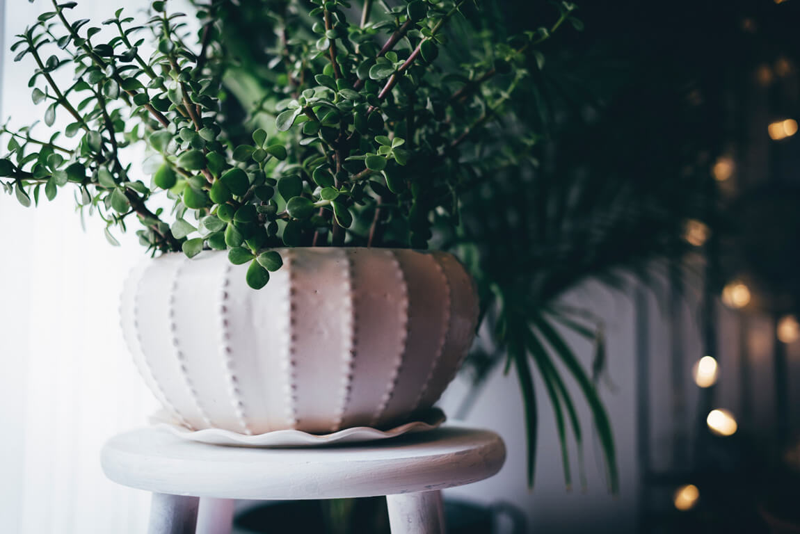 Follow these house plant care and styling tips for your own jungalow style!