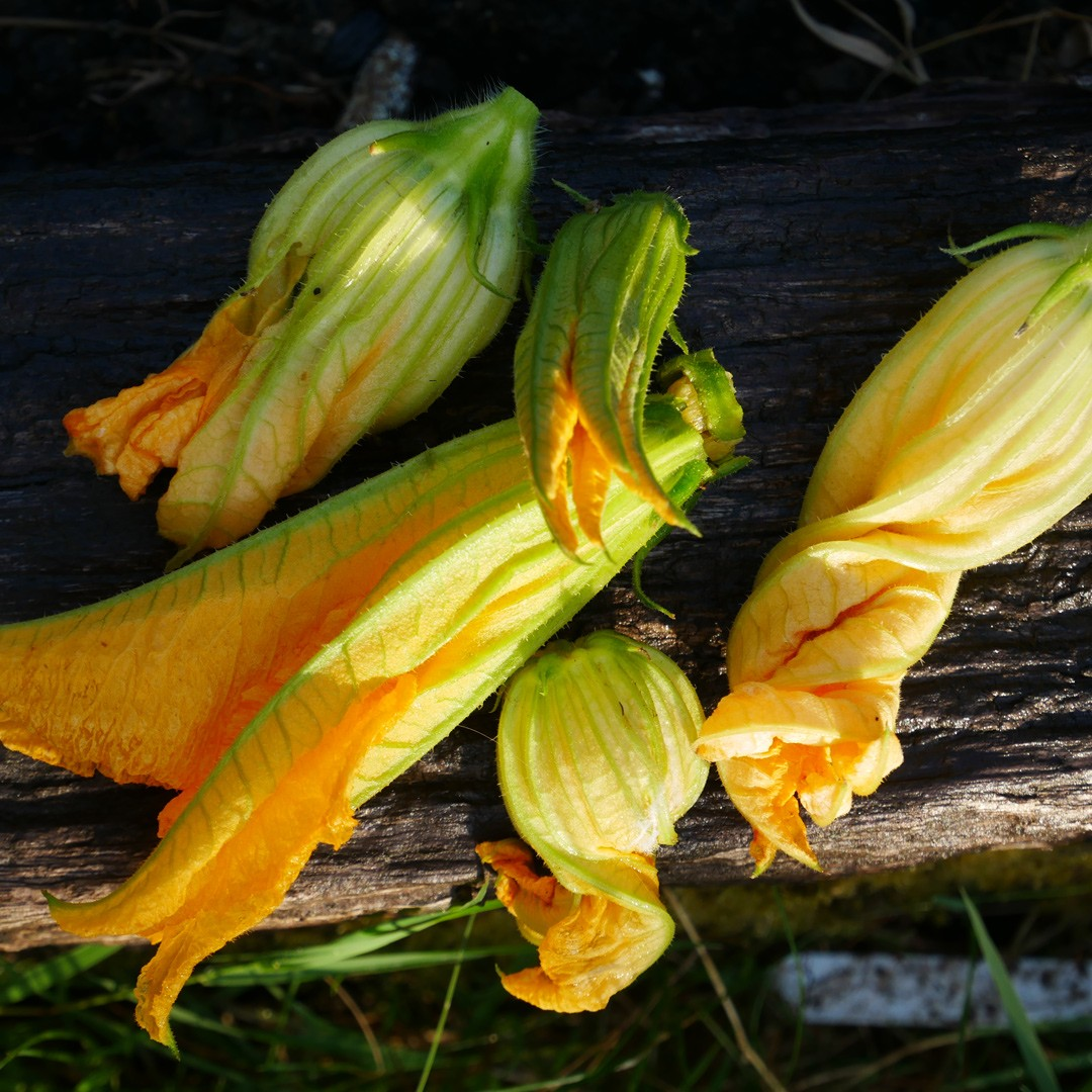 Courgette flowers are absolutely wonderful deep fried in batter. You can pick the young courgette along with it and cook that too. Find the recipe here on Chalk & Moss (chalkandmoss.com).