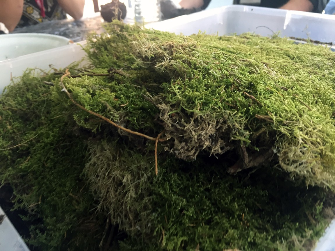 You can buy sheets of moss or harvest your own for your kokedama moss ball. How to make Kokedama - find step by step instructions on Chalk & Moss (chalkandmoss.com).