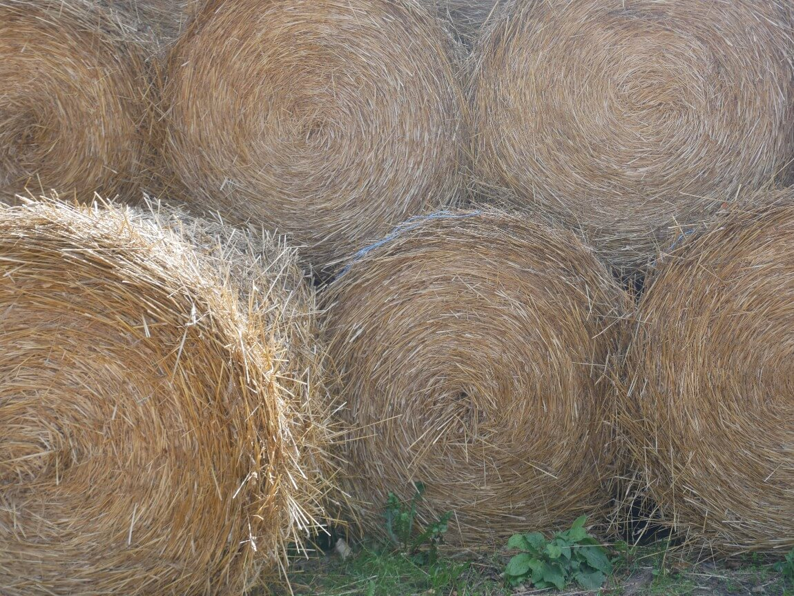 I find hay bales mesmerising! These are near our family summer house outside Kalmar in southern Sweden.