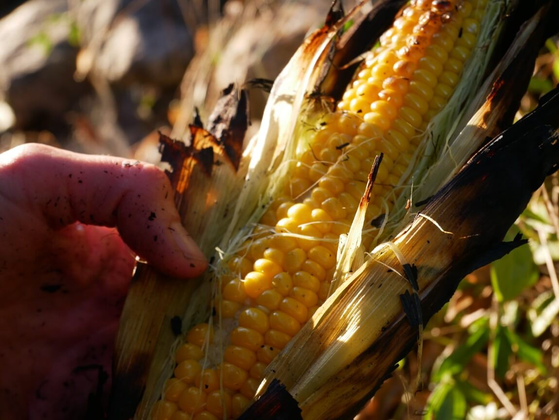 Is there anything that says late summer more than fresh corn on the cob? And better yet, pick your own and cook them over an open fire, then served with melting butter and a sprinkling of salt.