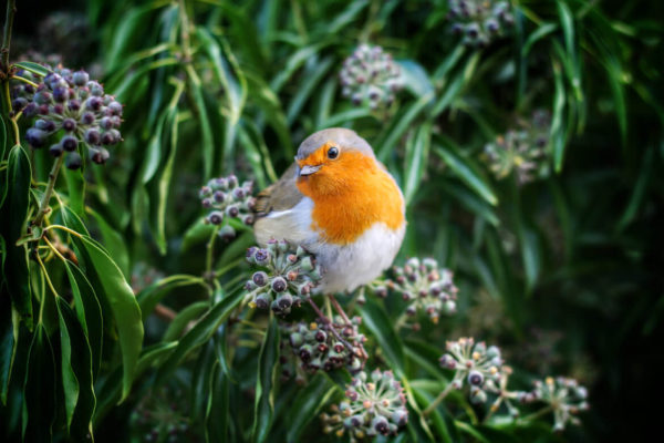 Spare an hour of your weekend to get involved with the RSPB birdwatch: Big Garden Birdwatch. Help the RSPB understand the patterns of our British Garden Birds.