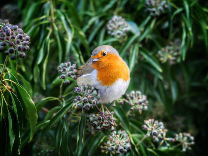 RSPB birdwatch – Big Garden Birdwatch 26-28/Jan