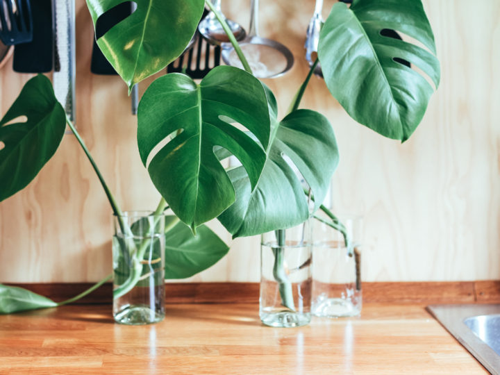 Best Indoor Plants: celebrate Houseplant Appreciation Day