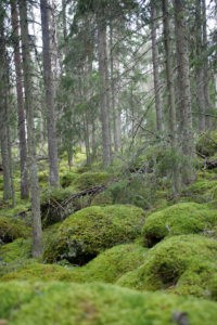 If you enjoy spending time outdoors, you'll know the special smell that comes with deep forests. Earthy, sweet, fresh and invigorating. This is Norra Kvill, a National Park of ancient forest in Southern Sweden.