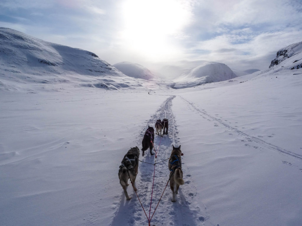Fjallraven Polar is a 300km journey with huskies across Finland, Norway and Sweden, above the Arctic circle. There will be 24 applicants from around the world taking part in this 6 day event in March 2020. Please vote for me to represent Sweden, as part of the Nordic East team! I feel myself the most when I'm surrounded by nature. I want to inspire the next generation to be our future explorers and adventurers! Please help get me there.