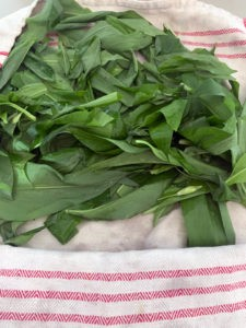 Wash and pat the wild garlic leaves dry in a towel before blitzing in the food processor, to make wild garlic pesto or wild garlic salt.